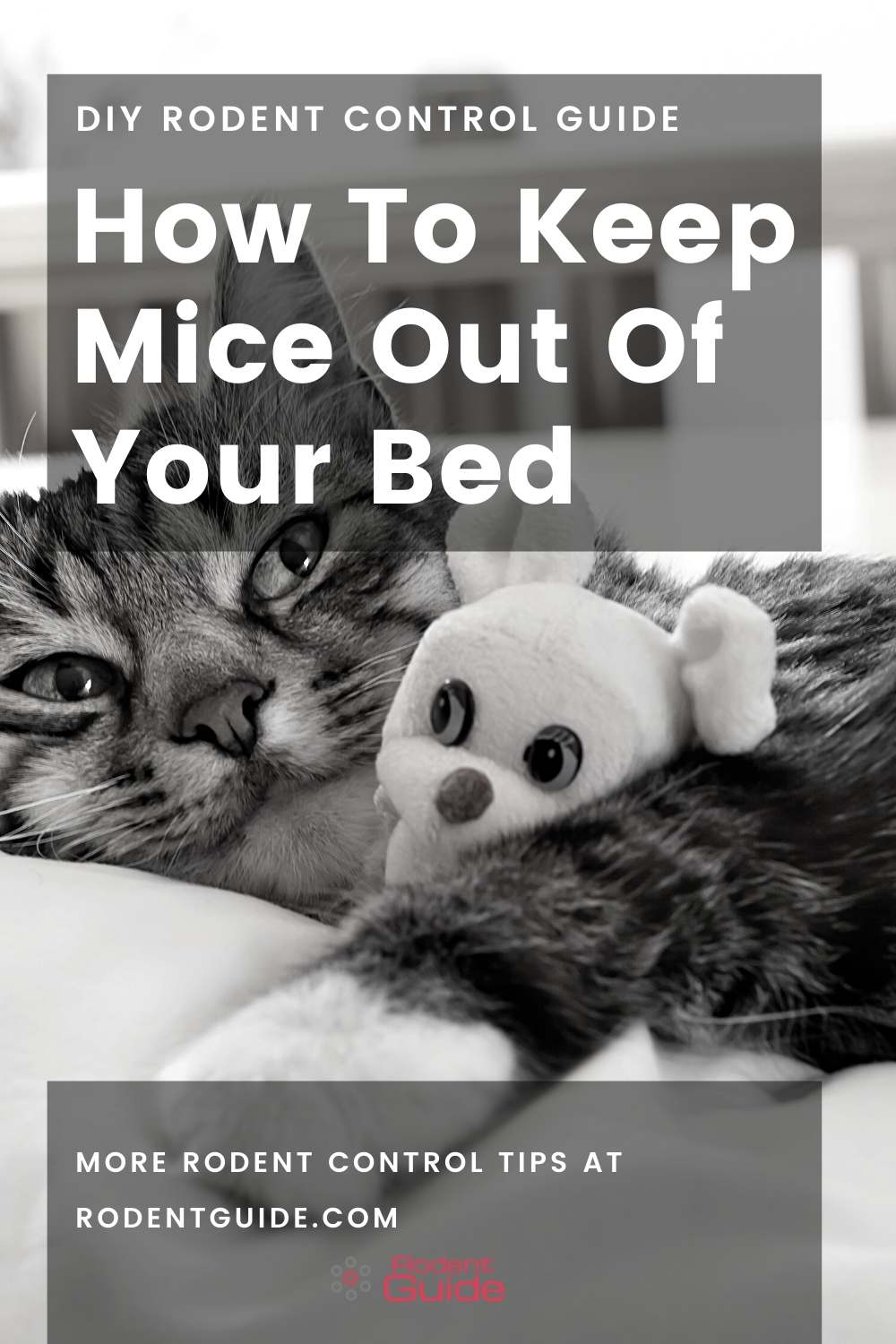 How To Keep Mice Out Of Your Bed (2)