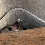 Where Do Mice Hide In A House - 10 Places
