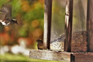 How To Deter Rats From your Yard remove bird feeder