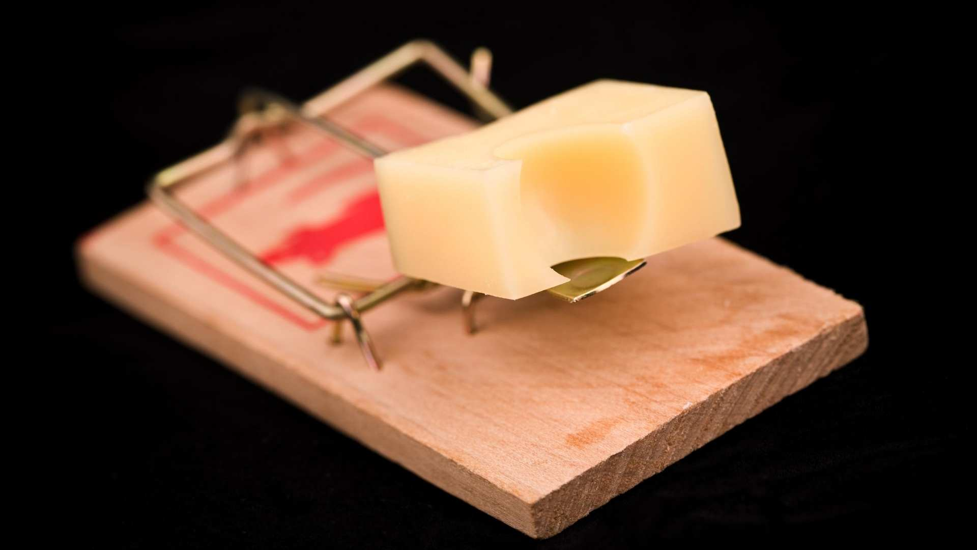 mouse trap with cheese on it