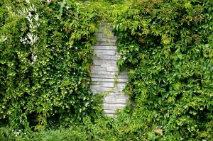 how to keep rats away from your home cut down shrubs