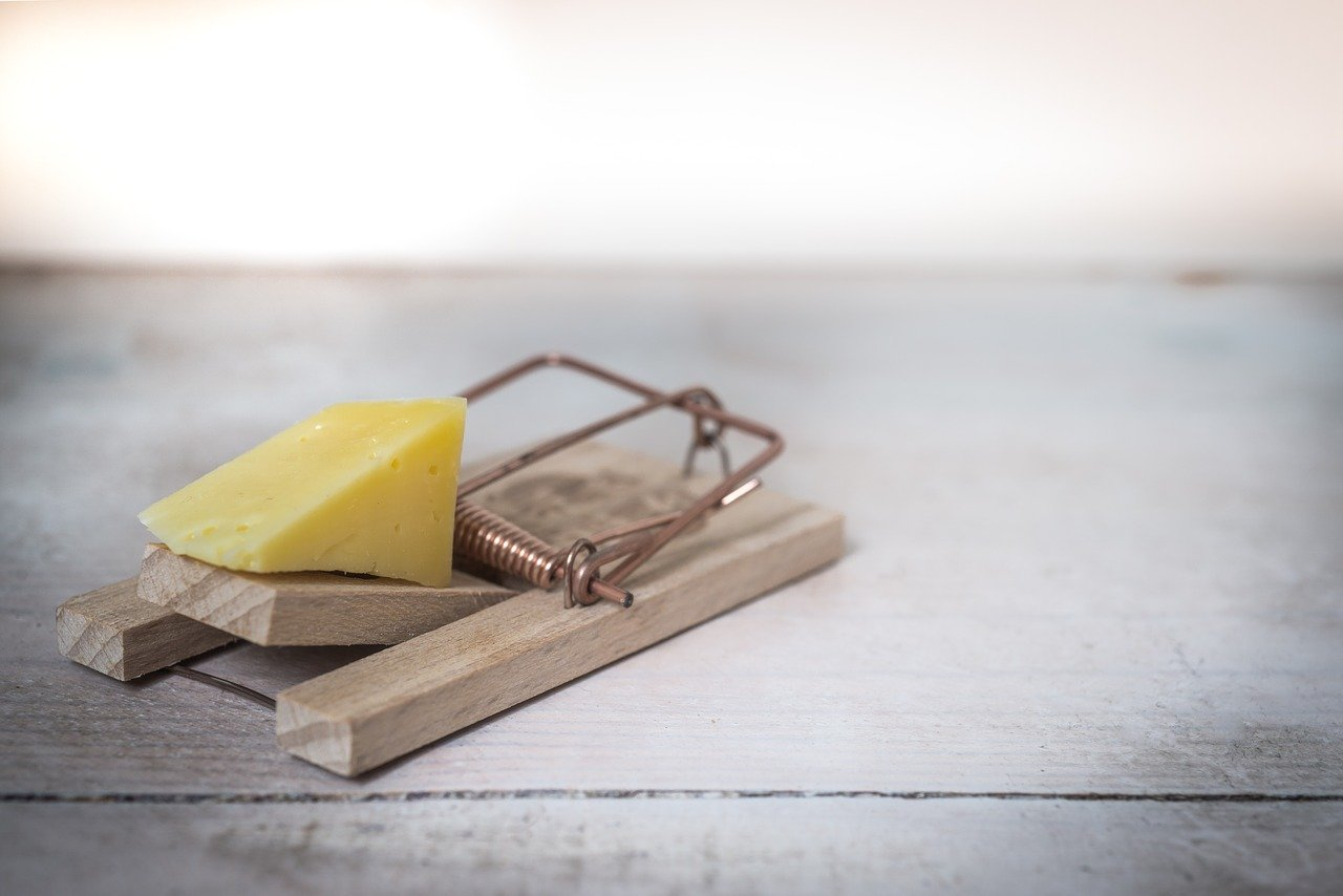 Best Mouse Traps For Small Mice