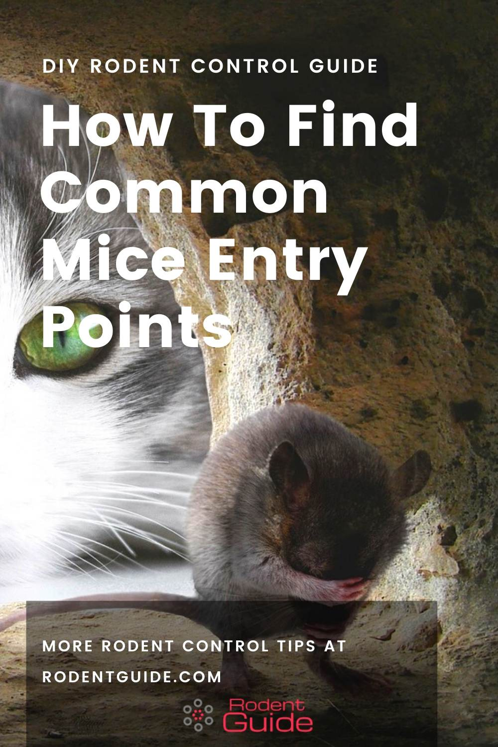 How To Find Common Mice Entry Points