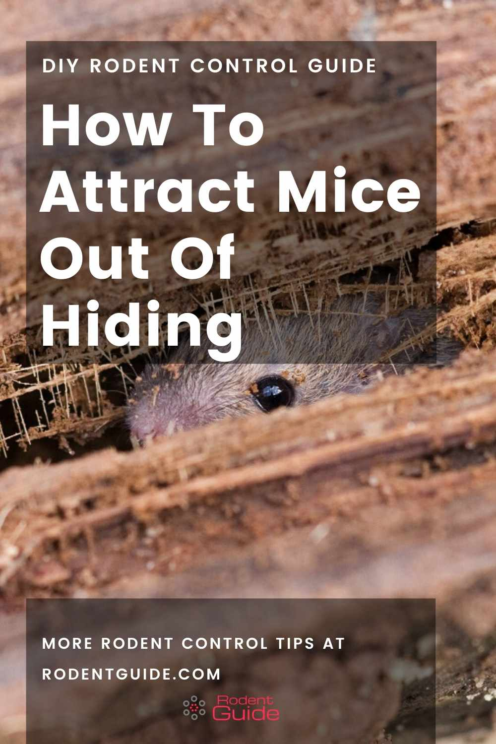 How To Lure Mice Out Of Hiding