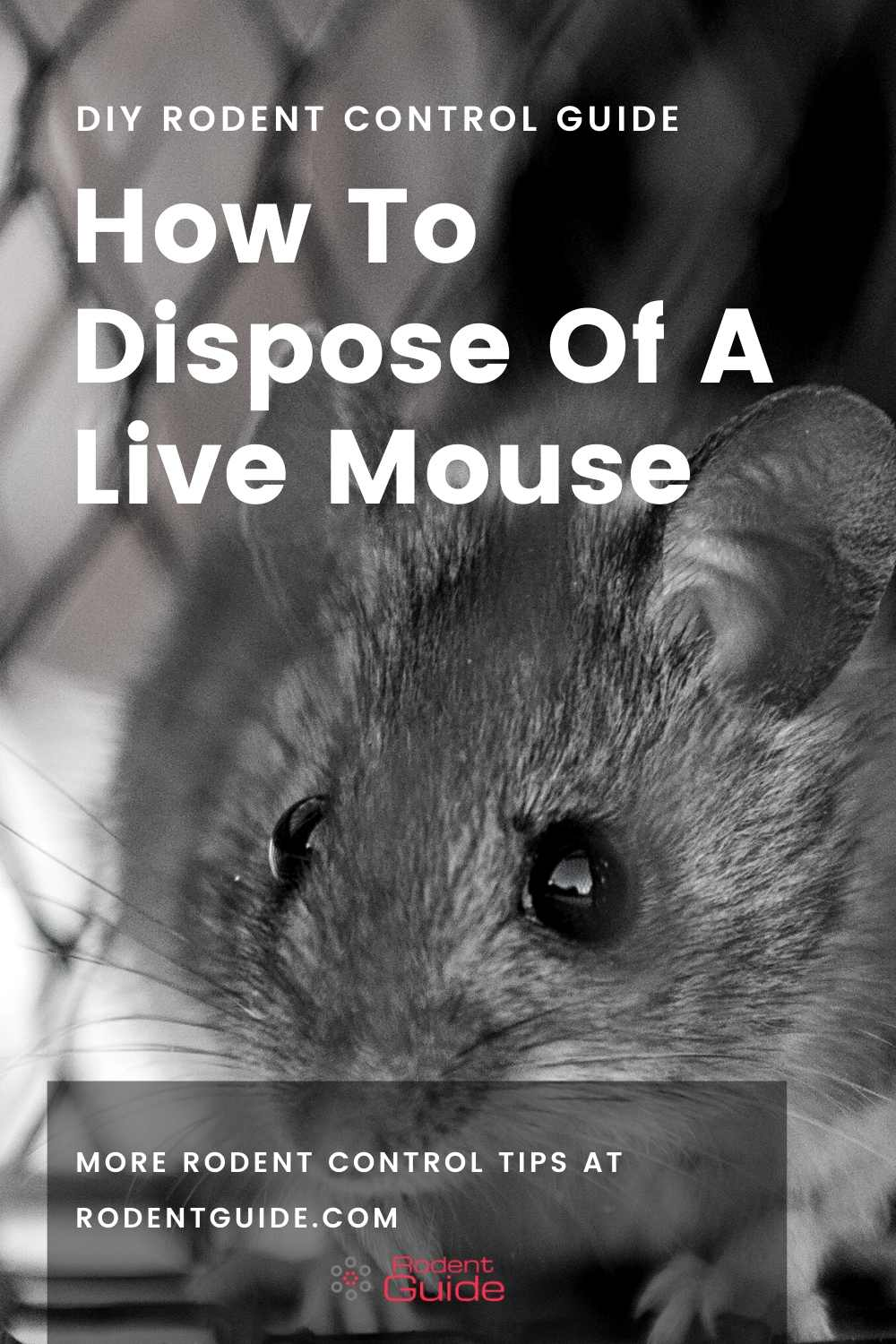 Where Do Mice Hide In A House (1)