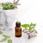 Peppermint Oil To Get Rid Of Mice - Does It Work?