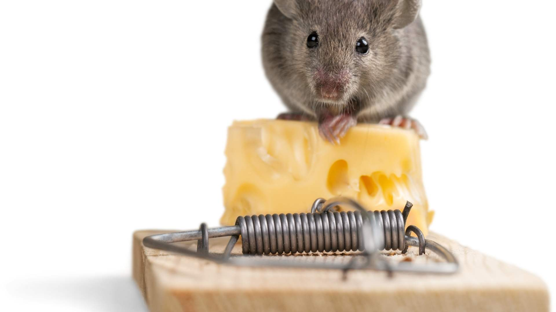 best mouse trap options