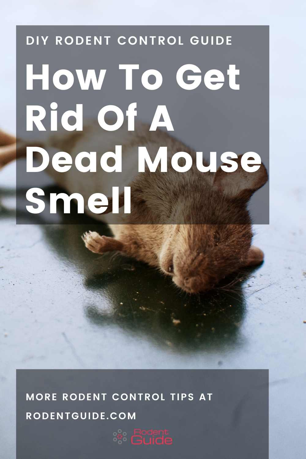 How To Get Rid Of A Dead Mouse Smell