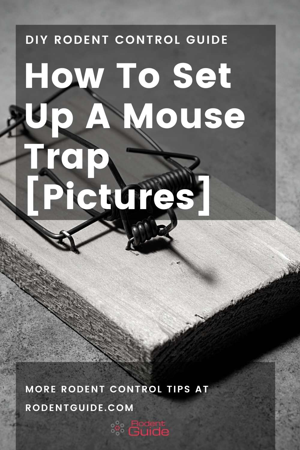 How To Set Up A Mouse Trap