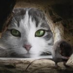 How to Get Rid of Mice With Kitty Litter - 5 Step Process