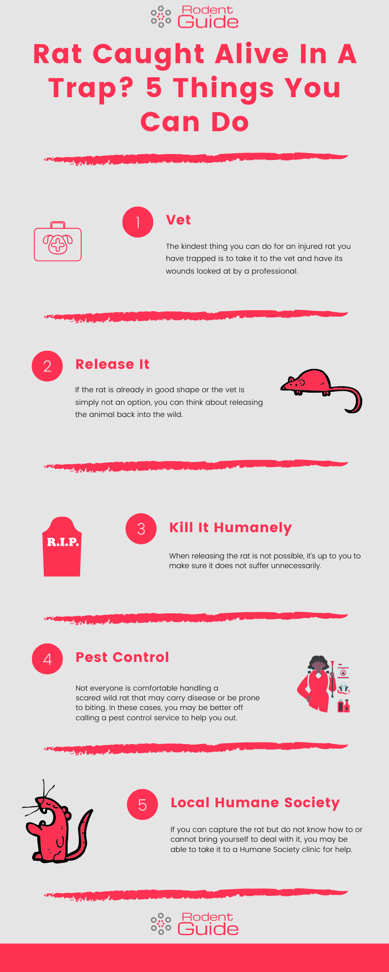 Rat Caught Alive In A Trap_ 5 Things You Can Do Infographic