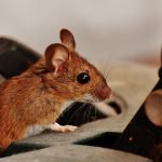 Why Do I Have Mice In My House? 7 Reasons