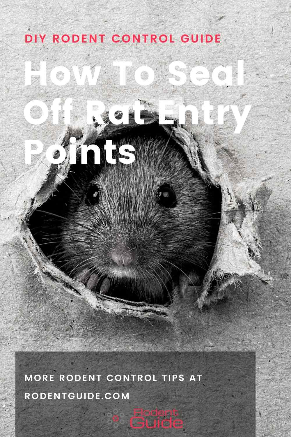 How To Seal Off Rat Entry Points