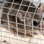 How To Get Rid Of Mice Without Killing Them - 7 Ways