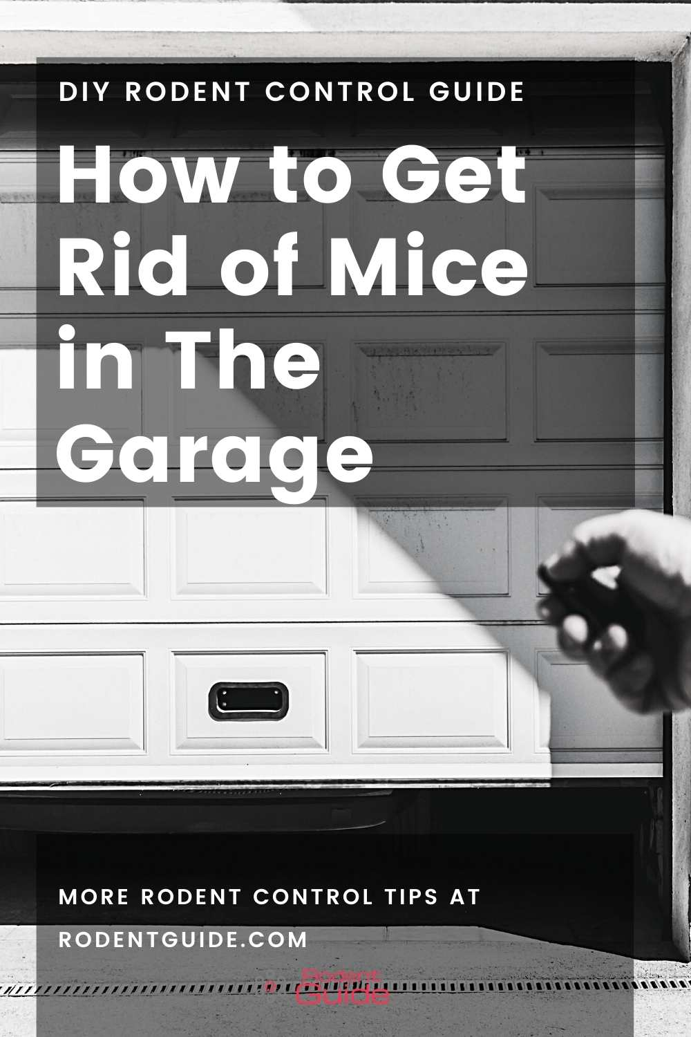 How to Get Rid of Mice in The Garage (1)