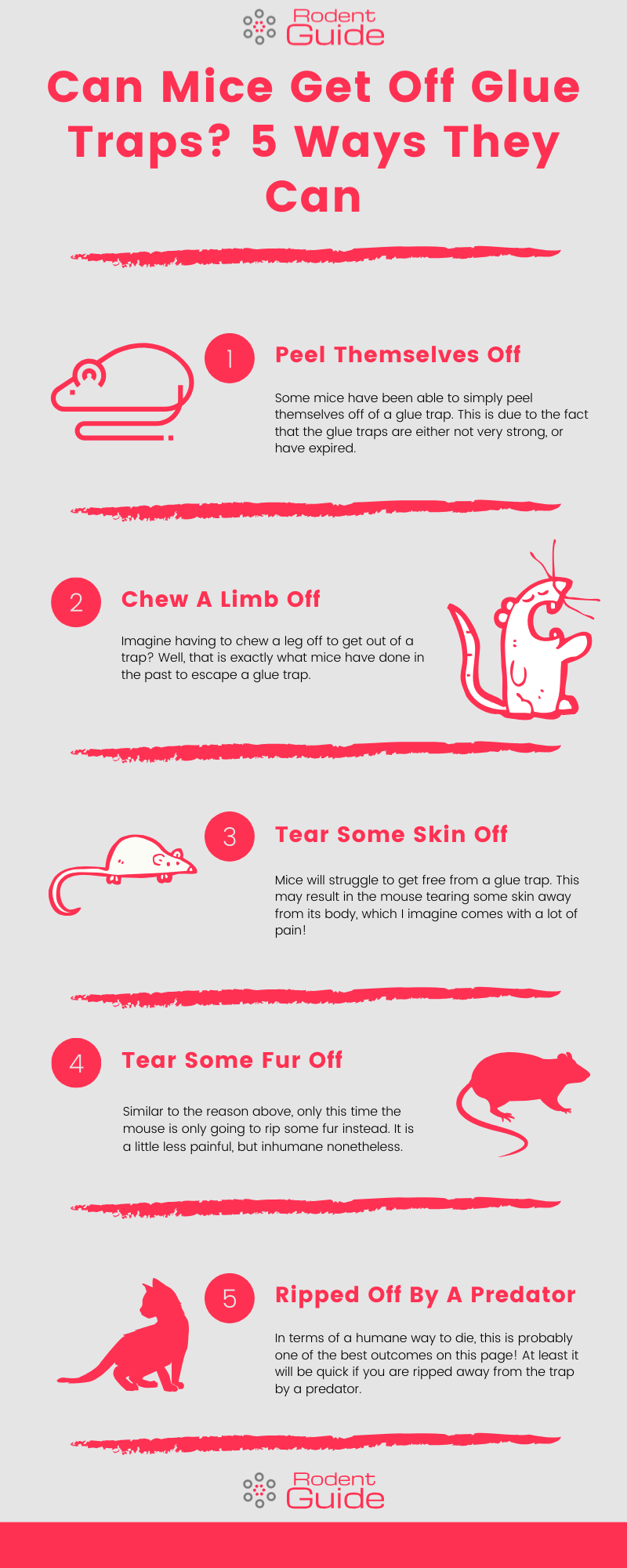 can mice get off glue traps infographic
