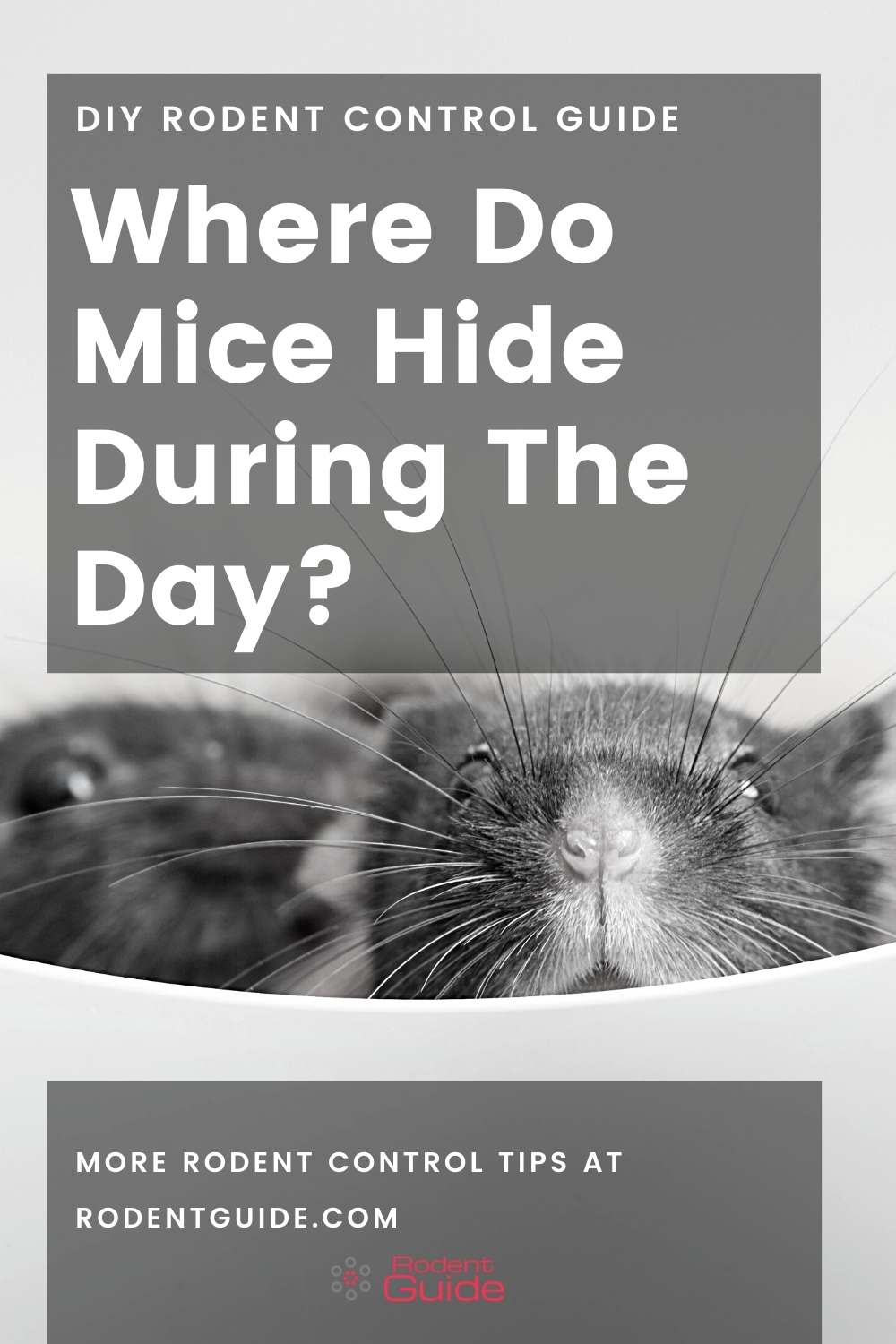 where do mice hide during the day (2)