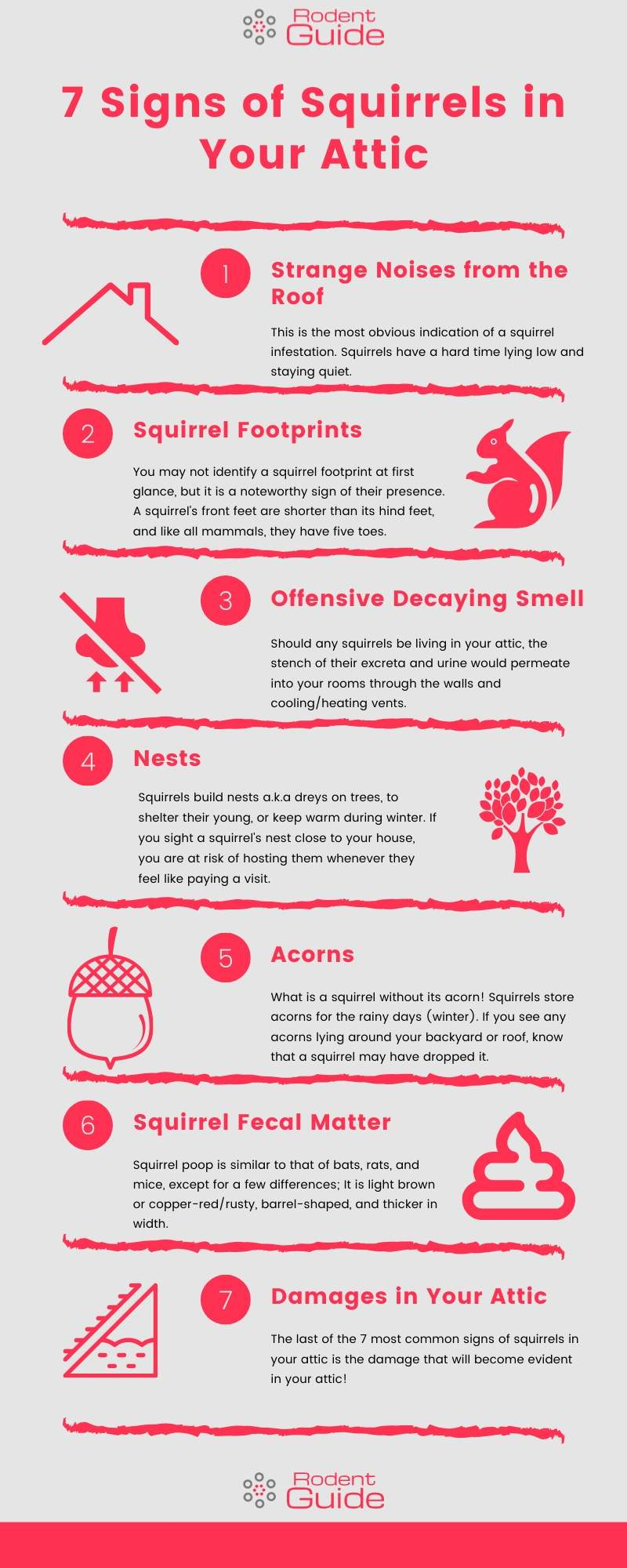 7 Signs of Squirrels in Your Attic Infographic