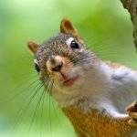 10 Best Squirrel Bait Options