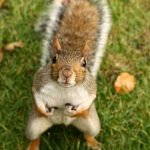 How To Keep Squirrels Out Of Your Yard - 7 Ways