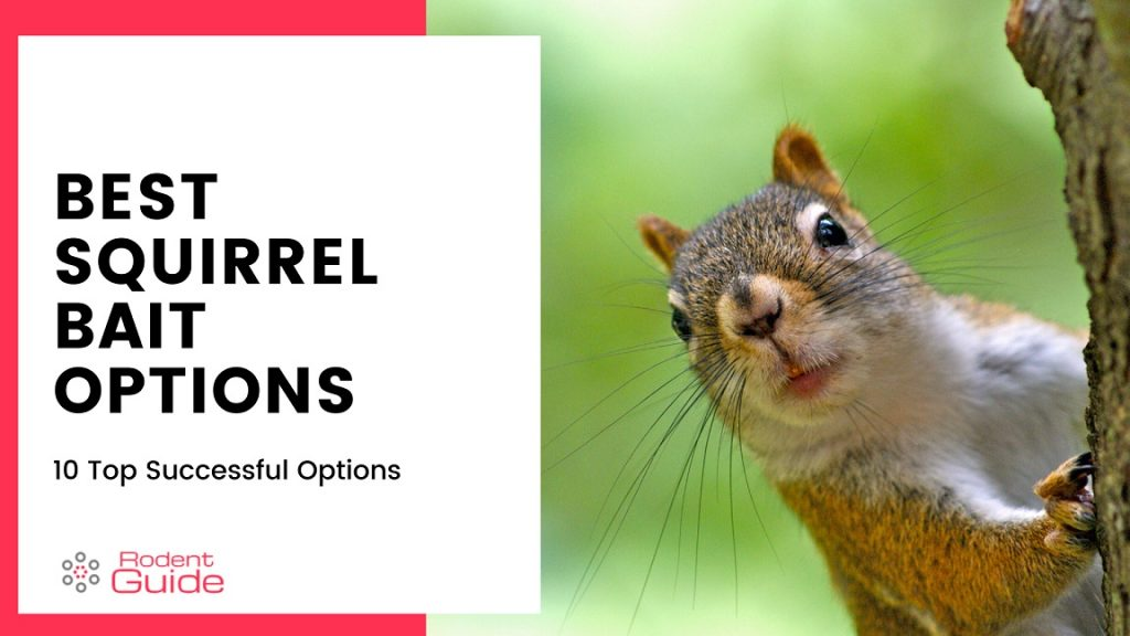 Squirrel Bait Options