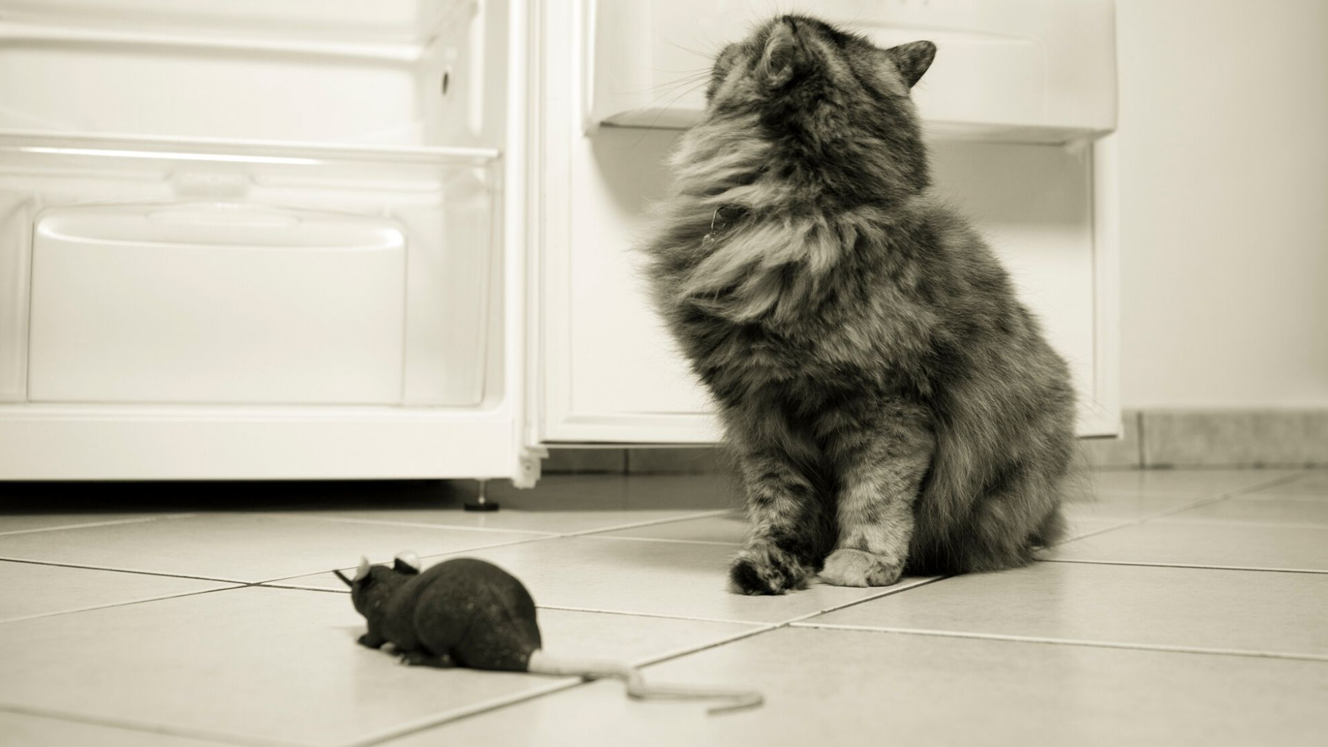 do cats eat rats