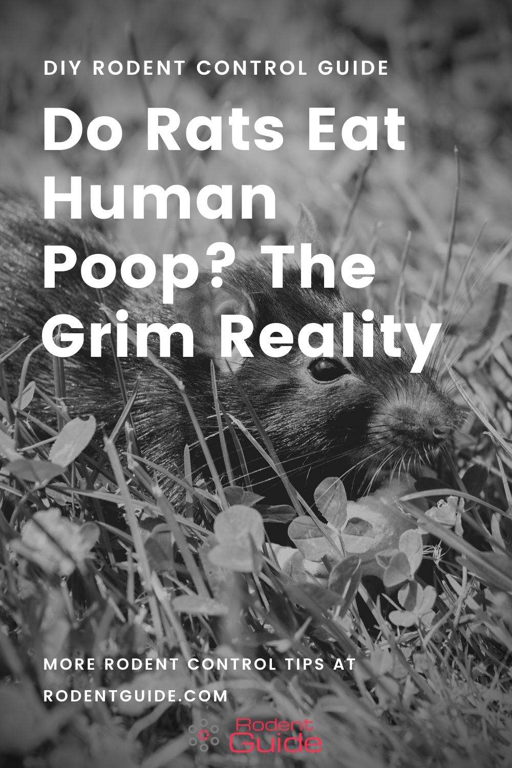 Do Rats Eat Human Poop_ The Grim Reality