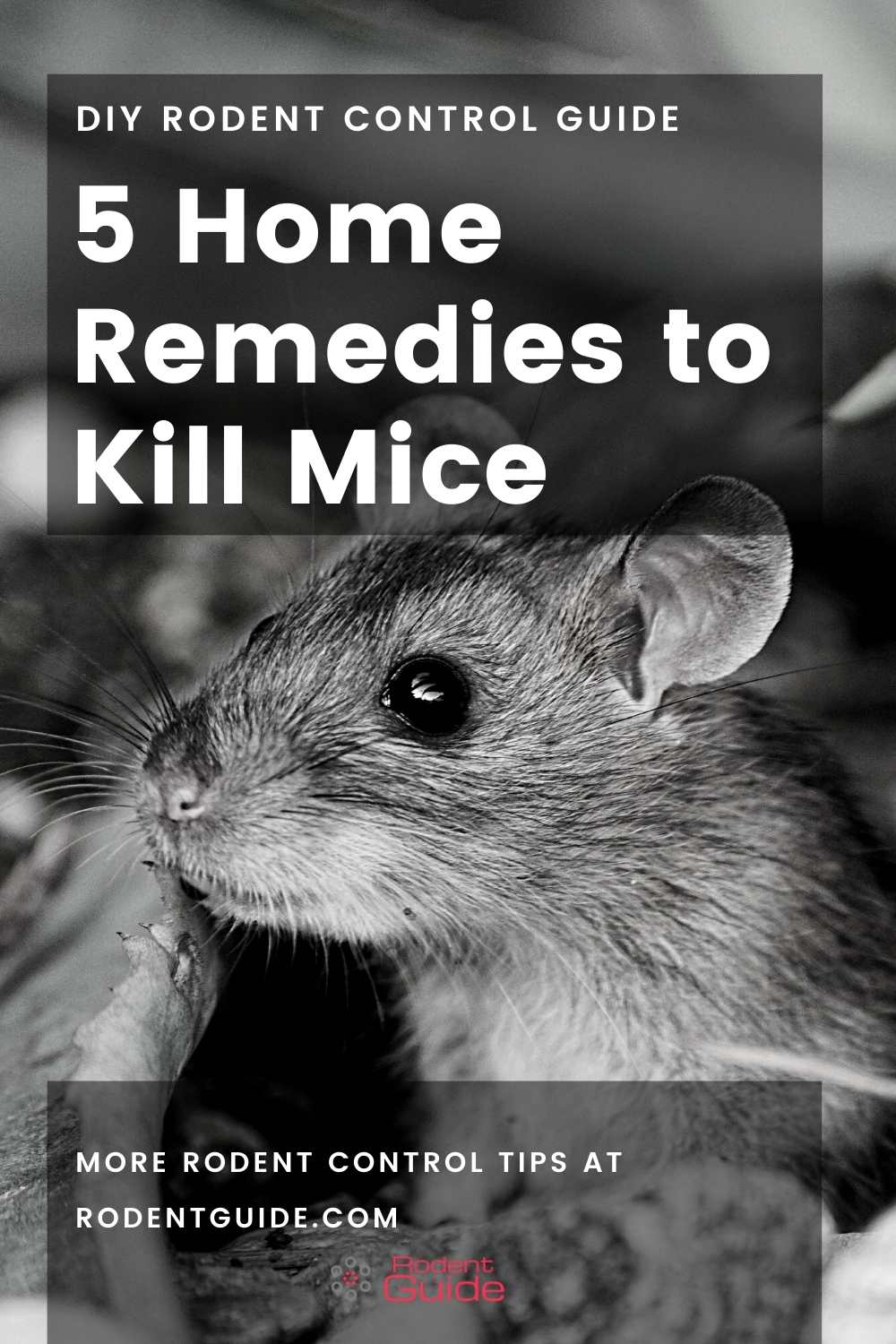 5 Home Remedies to Kill Mice
