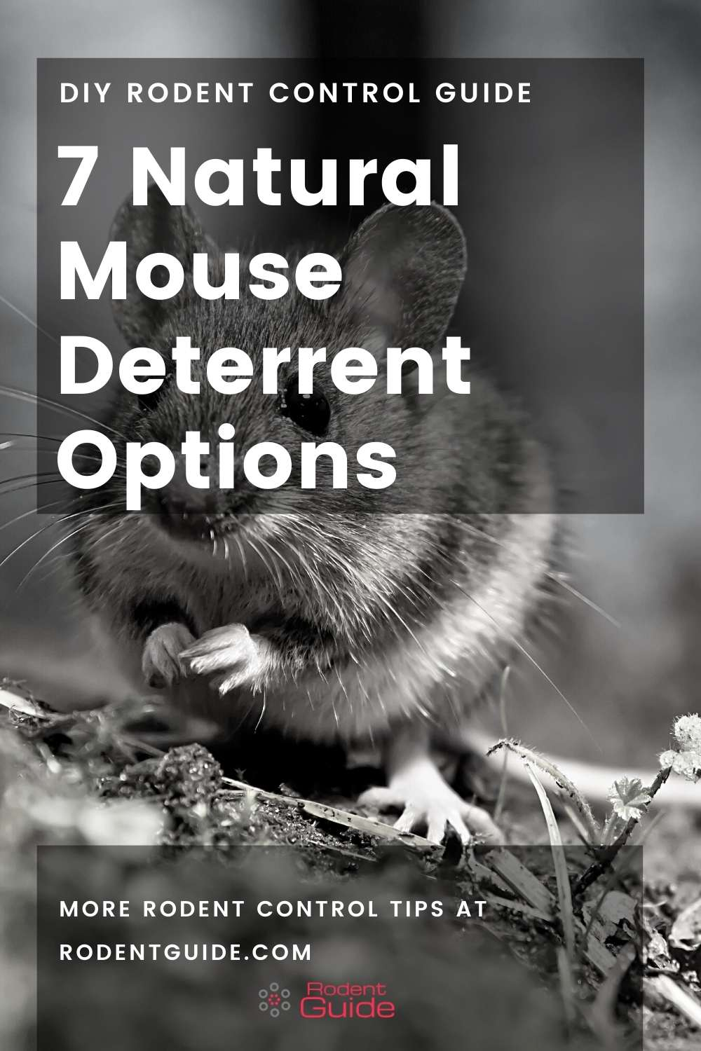 7 Natural Mouse Deterrent Options