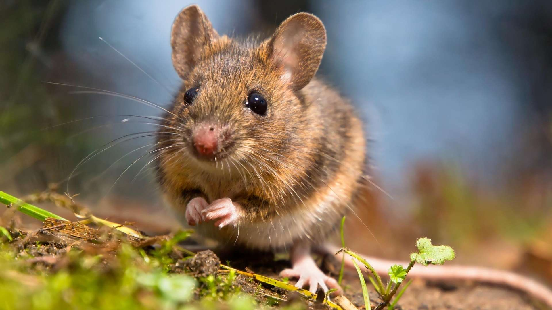 Natural Mouse Deterrent Options