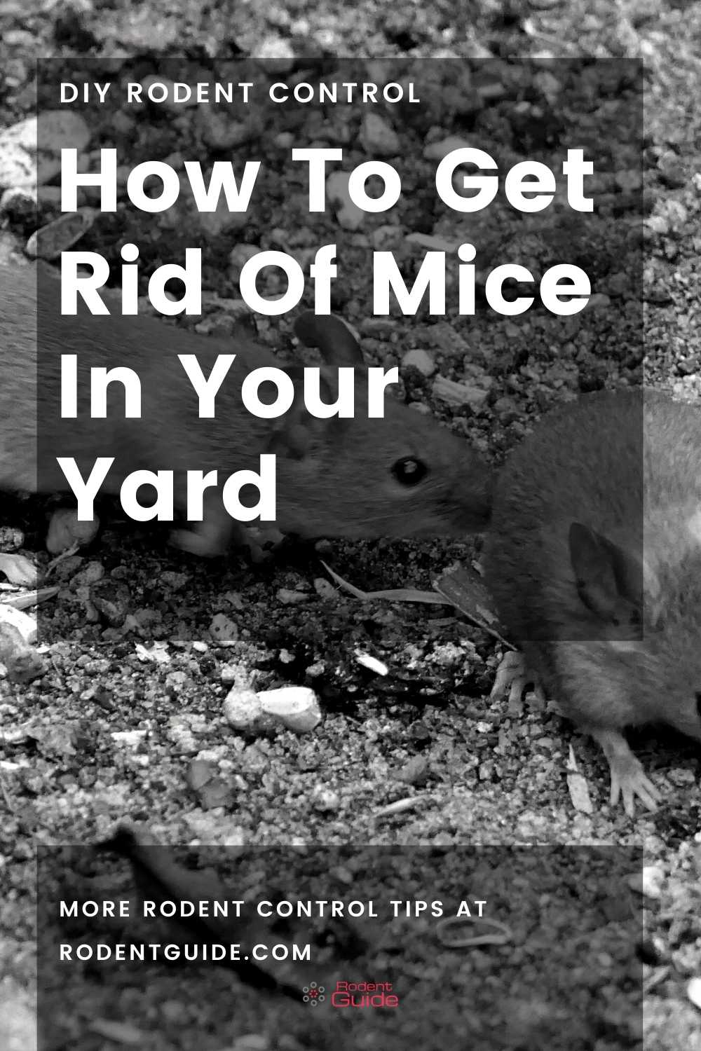 How To Get Rid Of Mice In Your Yard pin