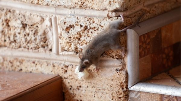 mouse wall