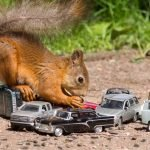 Deterring Squirrels From Cars – 7 Tips For Success