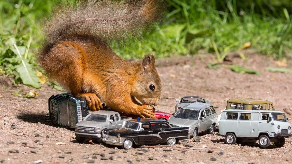 squirrel with cars outside