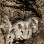 What Do Mice Hate? 10 Confirmed Items