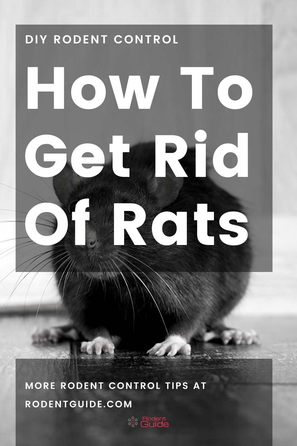 How To Get Rid Of Rats pin