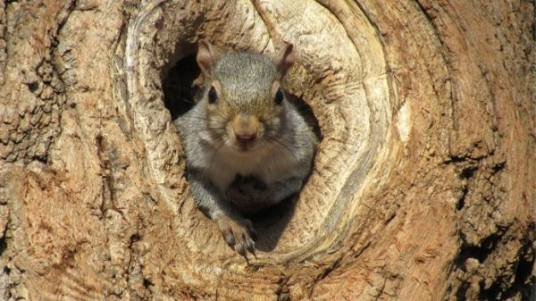 squirrel poking head through hole